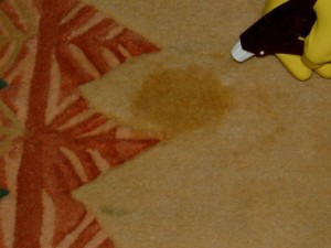 Permanent Stain Removal On Wool Carpet