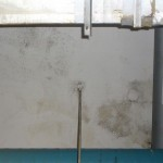 Production Facility Affected by Visible Mold Growth